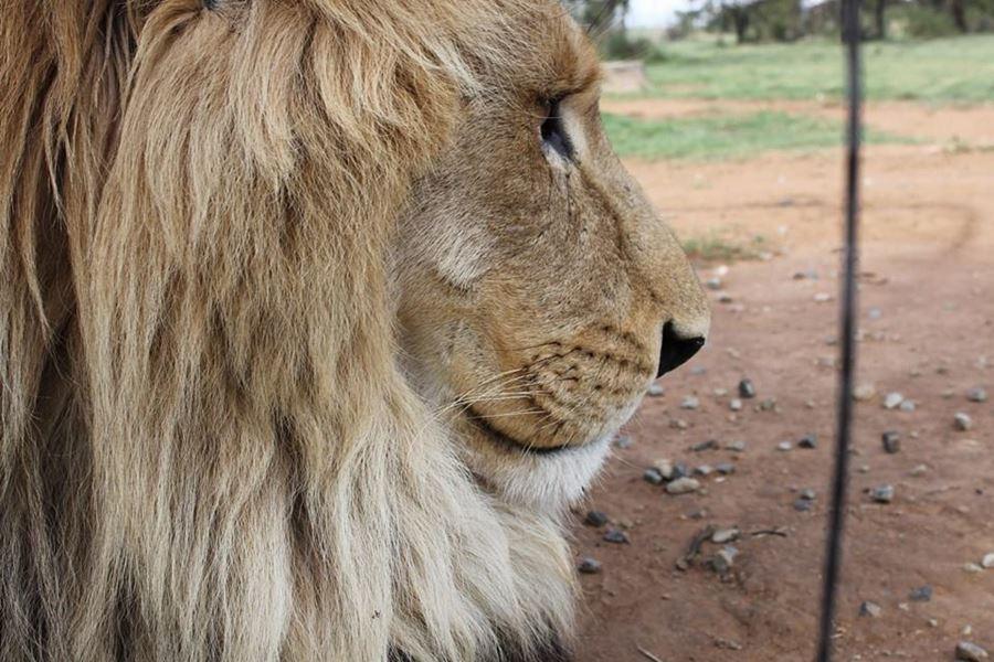 Femke Fatale in South Africa